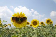Солнечные очки солнцецвета нося стоковые фото