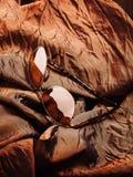 Солнечные очки с коричневыми объективами на коричневой сияющей ткани стоковые изображения