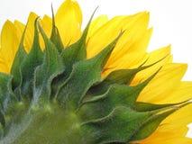 Солнечные спайки Стоковая Фотография RF