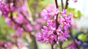 Солнечные цветки весны видеоматериал