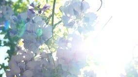 Солнечные цветки весны сток-видео