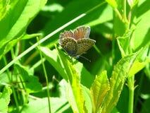 Солнечный, бабочка сидит на зеленой ветви Стоковые Изображения