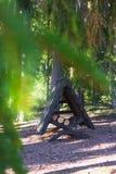 Солнечный весенний день в пуще Стоковые Фотографии RF