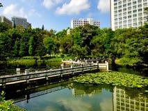 Солнечный день & вид на озеро в городе университета стоковые фото