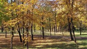 Солнечный день в парке осени сток-видео