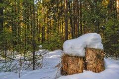Солнечный день в снежном coniferous ландшафте леса леса покрытой снег зимы coniferous стоковое изображение rf
