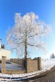 Солнечный день зимы Стоковые Изображения RF