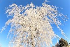 Солнечный день зимы Стоковая Фотография RF
