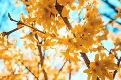 Солнечный день и солнечная ветвь дерева Стоковые Фото