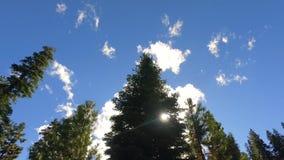 Солнечный день на национальном парке секвойи акции видеоматериалы