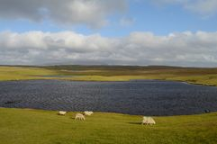 Солнечный день на островах Shetland стоковые изображения