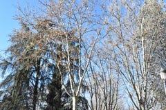 Солнечный зимний день в Мадриде Испании Стоковые Изображения RF