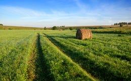 Солнечный ландшафт лета с земной сельской дорогой стоковое изображение rf