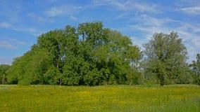 Солнечный луг с много желтых wildflowers и сочных зеленых tres позади Стоковое Изображение