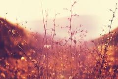 Солнечный лужок Стоковая Фотография