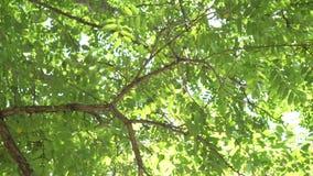 Солнечный луч делает свой путь через зеленую листву деревьев акции видеоматериалы