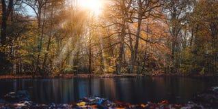 Солнечный луч лучей солнца осени кажется trought красивыми ветвями дерева и листья в городе паркуют с прудом в фронте  стоковые фото