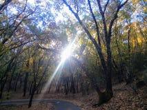 Солнечный луч через деревья Forrest осенью стоковое изображение