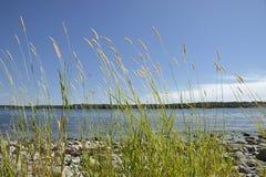 Солнечный пляж с фокусом на траве и голубом небе стоковые изображения rf