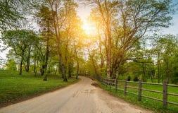 Солнечный путь через лес стоковые изображения rf