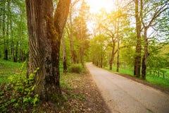 Солнечный путь через лес стоковое изображение rf