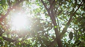 Солнечный свет замедленного движения красивый через деревья листьев зеленые в парке Тайбэя акции видеоматериалы