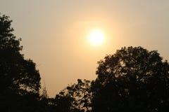 Солнечный свет на после полудня стоковое изображение rf