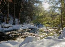 Солнечный свет на снежном реке леса стоковые изображения