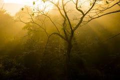 Солнечный свет пропуская через дерево на восходе солнца Стоковые Изображения