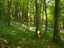 Солнечный свет светя в древесину весной стоковые изображения rf