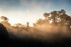 Солнечный свет с туманом в Forest Park на восходе солнца стоковая фотография