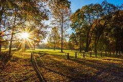 Солнечный свет утра в парке стоковая фотография