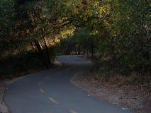Солнечный свет фильтруя через путь велосипеда дуба стоковое фото rf