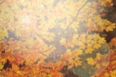 Солнечный свет через желтые и оранжевые листья стоковые фото