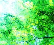 Солнечный свет через сень дерева стоковая фотография rf