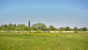 Солнечный сочный зеленый ландшафт болота с тростником и деревьями во фламандской сельской местности стоковое фото