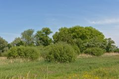 Солнечный сочный зеленый ландшафт болота с тростником и деревьями во фламандской сельской местности стоковые фотографии rf
