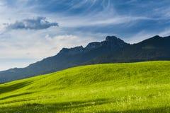 Солнечный сочный зеленый лужок Стоковые Фотографии RF