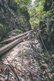 солнечный туристский след в древесинах в осени - винтажном взгляде Стоковое Изображение RF