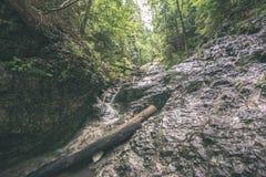 солнечный туристский след в древесинах в осени - винтажном взгляде Стоковые Изображения RF
