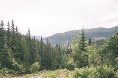 солнечный туристский след в древесинах в осени - винтажном взгляде Стоковая Фотография RF