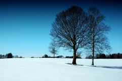 солнечный wintertime Стоковые Фотографии RF