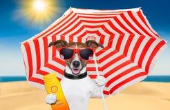 Солнцезащитный крем лета собаки Стоковое Изображение