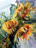 Солнцецветы желтого цвета букета цветков предпосылки искусства акварели творческие свежие живые текстурированные флористические Стоковое Изображение RF