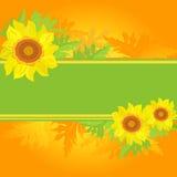 солнцецветы знамени флористические Стоковая Фотография RF