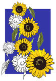 солнцецветы иллюстрации Стоковое Фото