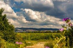 Солнцецветы и красивые поля солнцецвета от Болгарии стоковая фотография rf
