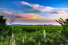 Солнцецветы и красивые поля солнцецвета от Болгарии стоковое фото