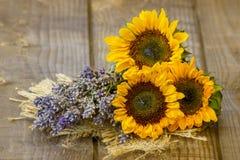 Солнцецветы и лаванда стоковые фото
