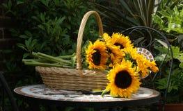 солнцецветы корзины Стоковые Изображения